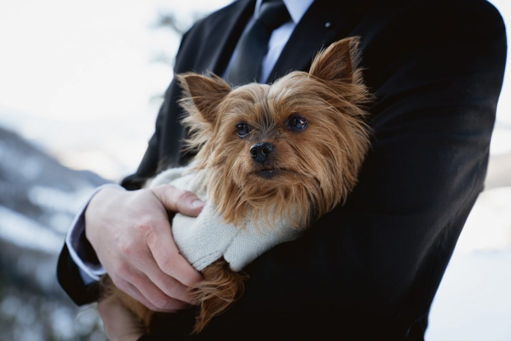 Their dog, Izzy, cuddled in the grooms arms wearing a sweater